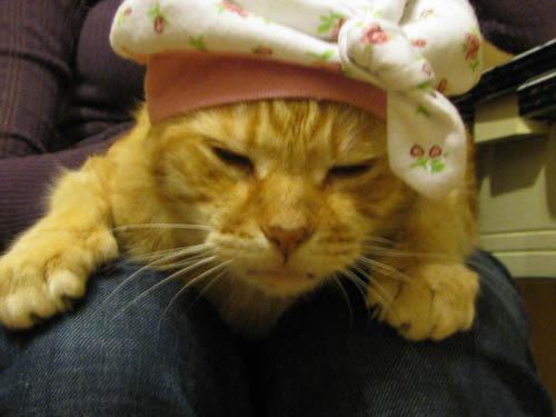 Assignment 19 Scavenger Hunt (2- heat, 5- kitten, 6-adventurous , 7-cat ) due Fri Apr 30, late work accepted until May 6 Fatso_10