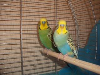 Kiki et Coco ce matin :) Dscf1714