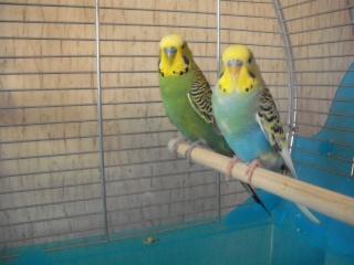 Kiki et Coco ce matin :) Dscf1715