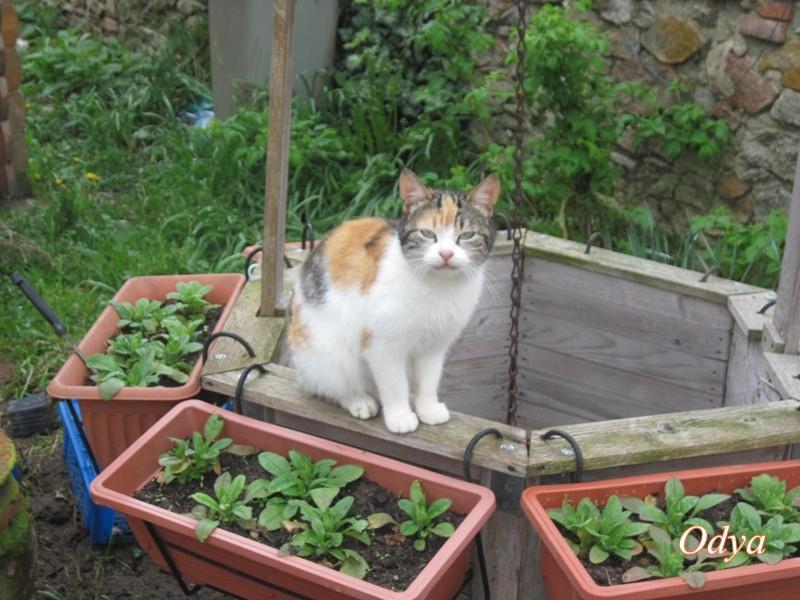 pour les amoureux des chats - Page 5 2011_m70