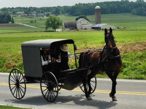 Anarcoprimitivismo - Página 4 Amish210