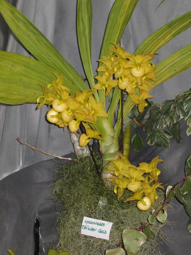 expo orchidees vergeze 2009 Img_1613