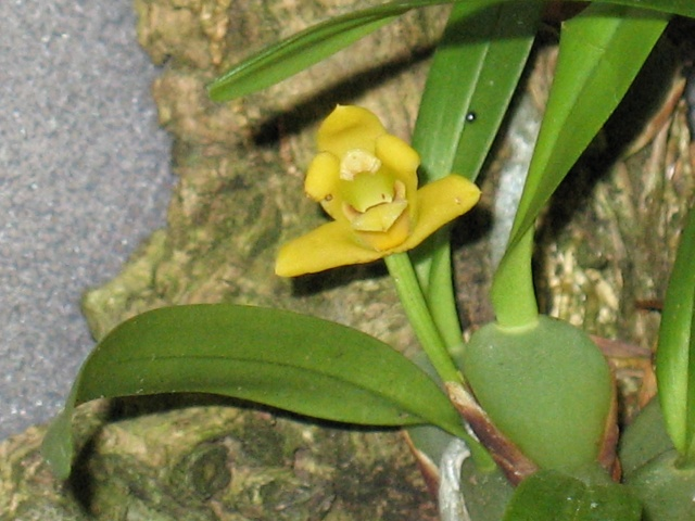 expo orchidees vergeze 2009 Img_1714