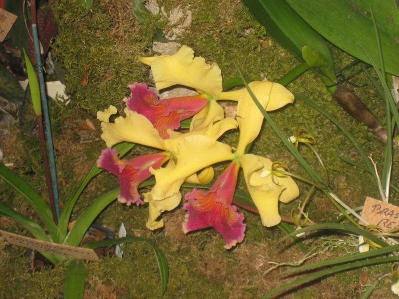 Expositions d'orchidées et de bonsaïs à salignac Eyvigues Img_3334