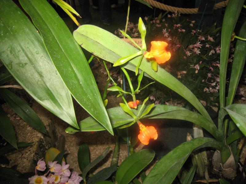 Expositions d'orchidées et de bonsaïs à salignac Eyvigues Img_3336