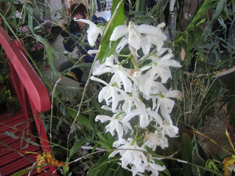 Expositions d'orchidées et de bonsaïs à salignac Eyvigues Img_3338