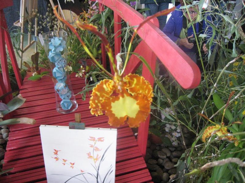 Expositions d'orchidées et de bonsaïs à salignac Eyvigues Img_3339