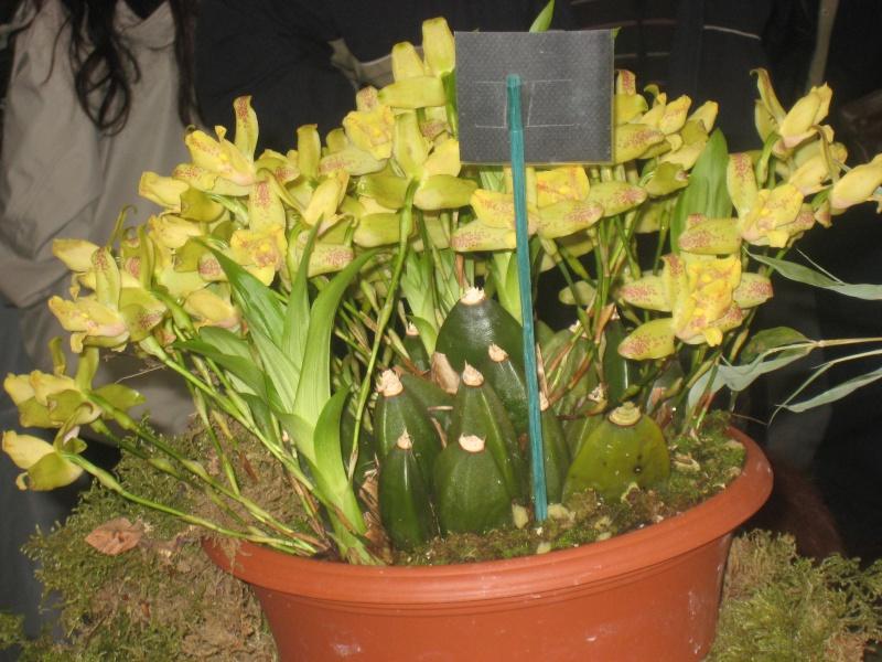 Expositions d'orchidées et de bonsaïs à salignac Eyvigues Img_3340