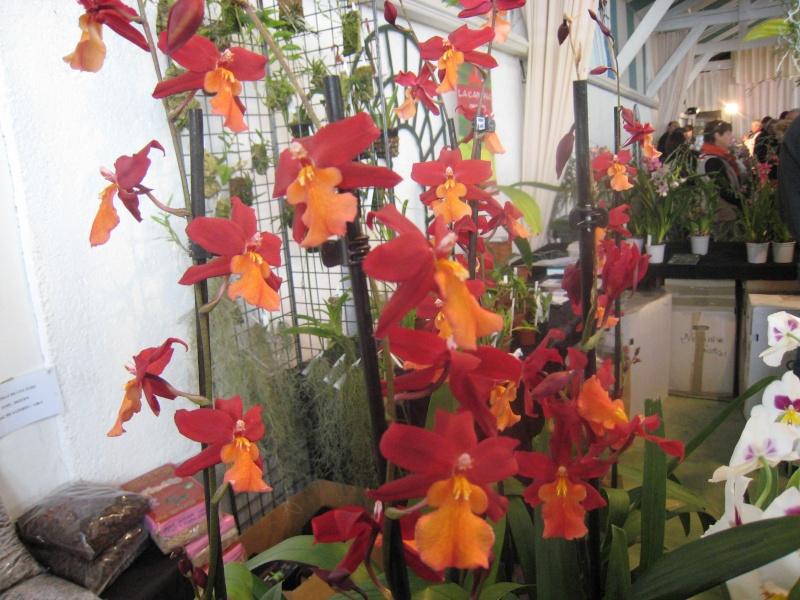Expositions d'orchidées et de bonsaïs à salignac Eyvigues Img_3342