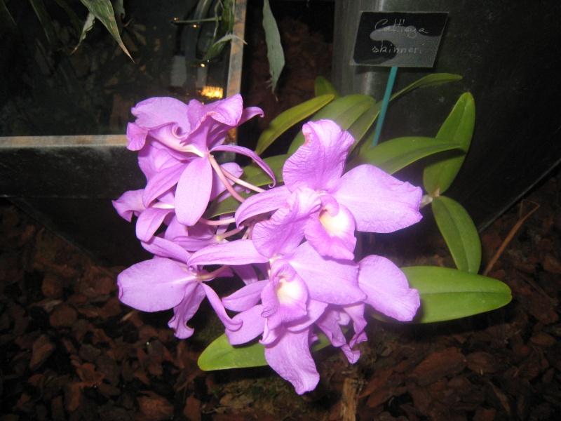 Expositions d'orchidées et de bonsaïs à salignac Eyvigues Img_3343