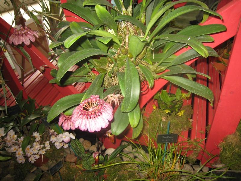 Expositions d'orchidées et de bonsaïs à salignac Eyvigues Img_3346