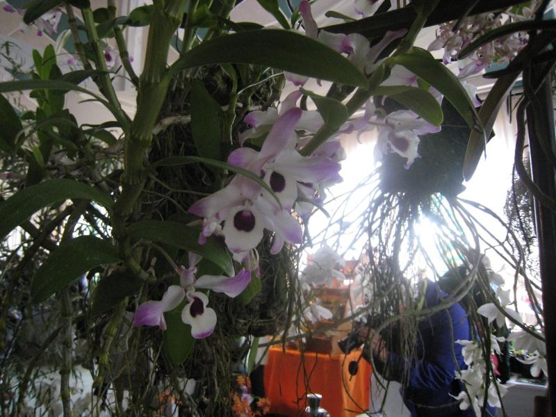 Expositions d'orchidées et de bonsaïs à salignac Eyvigues Img_3349