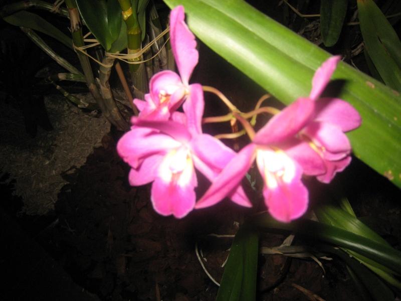 Expositions d'orchidées et de bonsaïs à salignac Eyvigues Img_3351