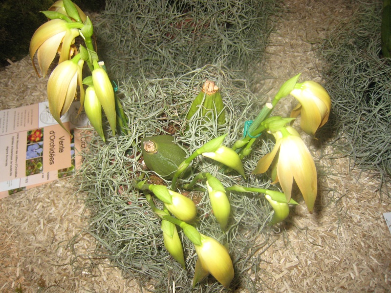 Expositions d'orchidées et de bonsaïs à salignac Eyvigues Img_3354