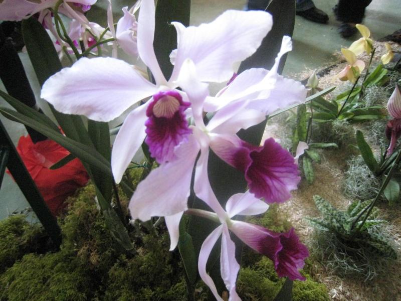Expositions d'orchidées et de bonsaïs à salignac Eyvigues Img_3416