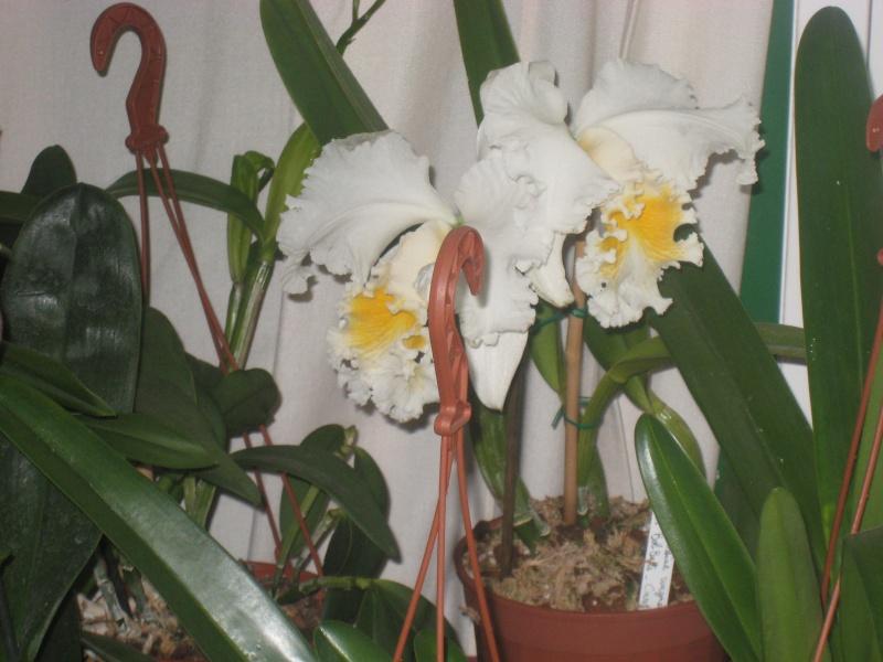 Expositions d'orchidées et de bonsaïs à salignac Eyvigues Img_3417