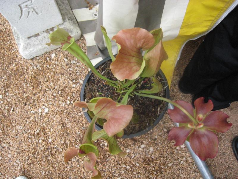 Expositions d'orchidées et de bonsaïs à salignac Eyvigues Img_3420