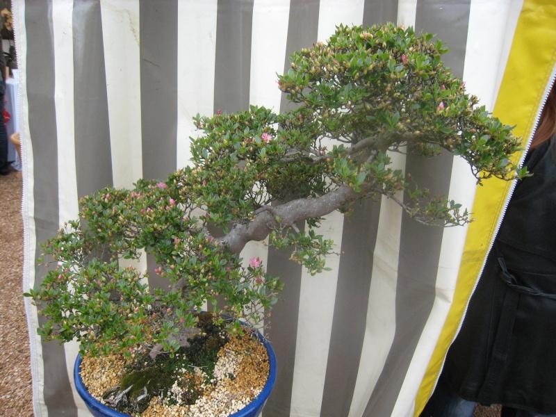 Expositions d'orchidées et de bonsaïs à salignac Eyvigues Img_3422