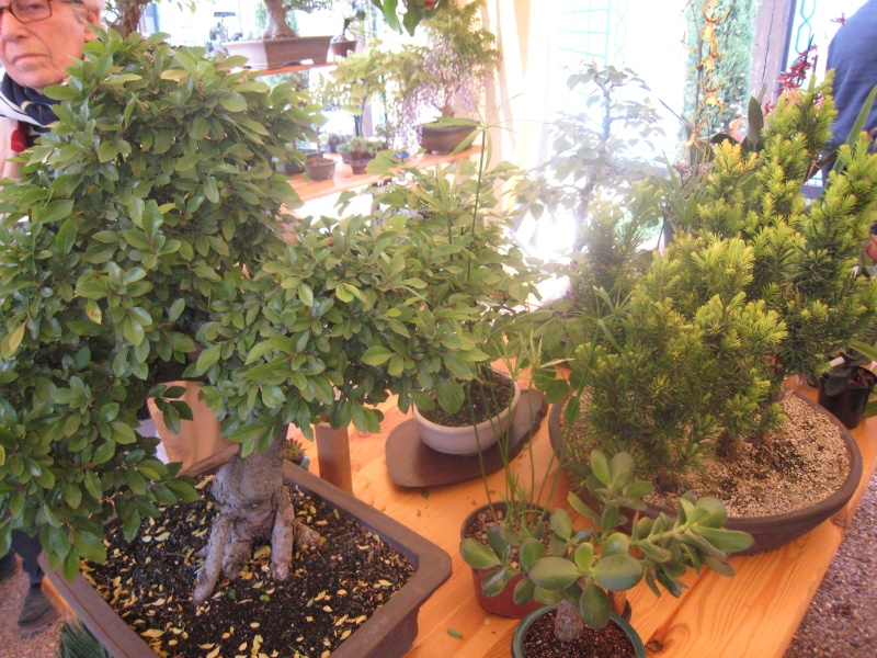 Expositions d'orchidées et de bonsaïs à salignac Eyvigues Img_3423