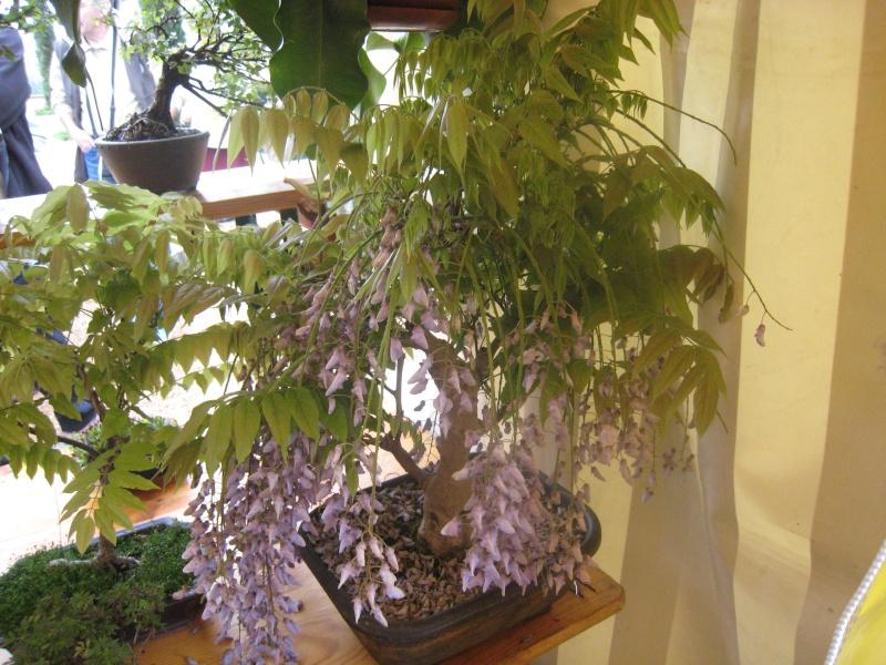 Expositions d'orchidées et de bonsaïs à salignac Eyvigues Img_3424