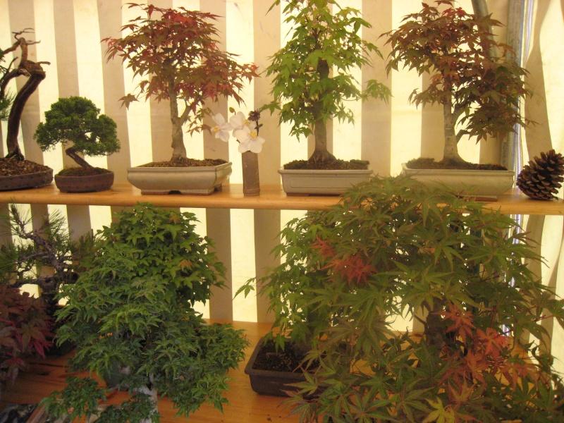 Expositions d'orchidées et de bonsaïs à salignac Eyvigues Img_3426