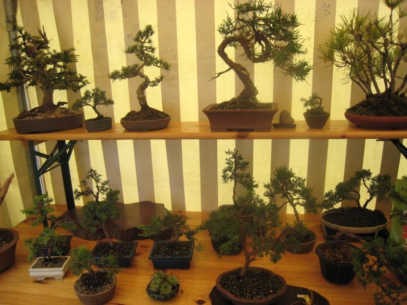 Expositions d'orchidées et de bonsaïs à salignac Eyvigues Img_3428