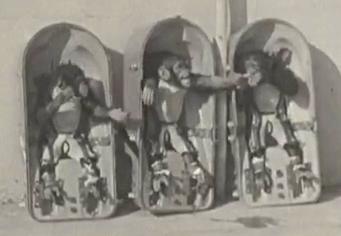les animaux spatiaux Chimps11