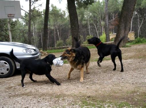 Les animaux de Cathy83 Cathy116