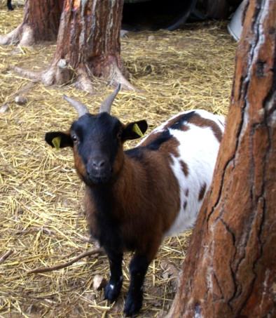 Les animaux de Cathy83 Cathy710
