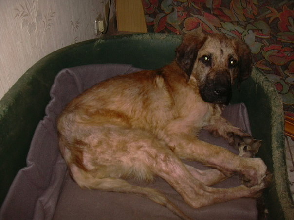 Oscar 8 mois, le survivant de Villecomtal, cherche sa famille définitive Oscar210