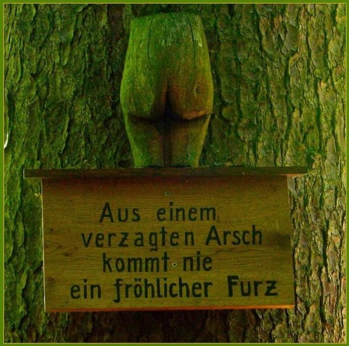 Lustige Schilder Waldsc10