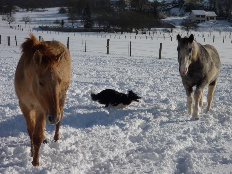 *** spécial *** photos de nos animaux *** Copie_15