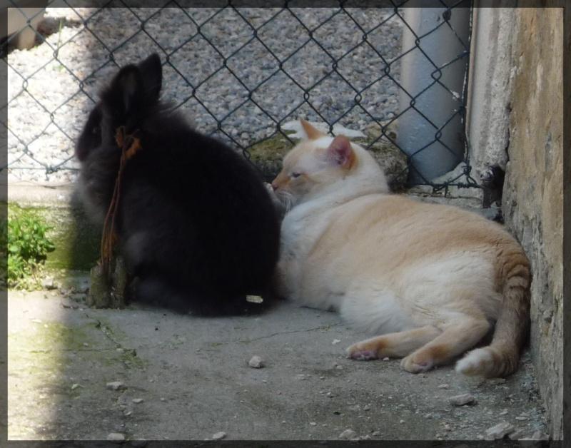 *** spécial *** photos de nos animaux *** P1040110