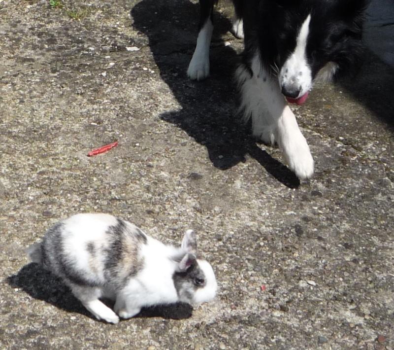 *** spécial *** photos de nos animaux *** P1040111