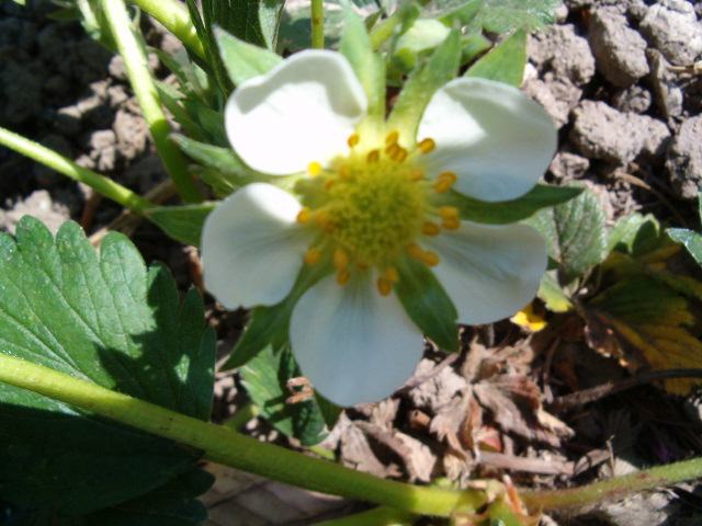 Le printemps a commencé!!!!!!!!!!!! - Page 2 1_5_2010