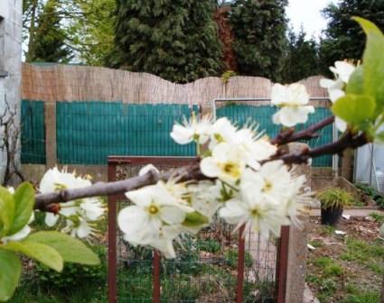 Le printemps a commencé!!!!!!!!!!!! - Page 38 26_04_12