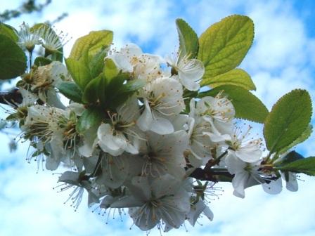 Le printemps a commencé!!!!!!!!!!!! - Page 38 26_04_13