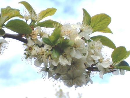 Le printemps a commencé!!!!!!!!!!!! - Page 38 26_04_14