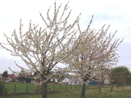 Le printemps a commencé!!!!!!!!!!!! - Page 38 26_04_15