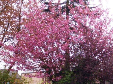 Le printemps a commencé!!!!!!!!!!!! - Page 38 26_04_16