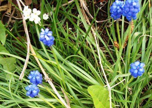 Le printemps a commencé!!!!!!!!!!!! - Page 38 26_04_21