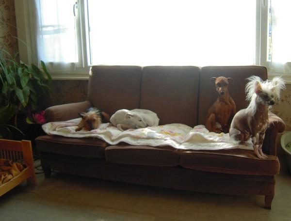 Ce matin (29 avril 2010) 4-cana10