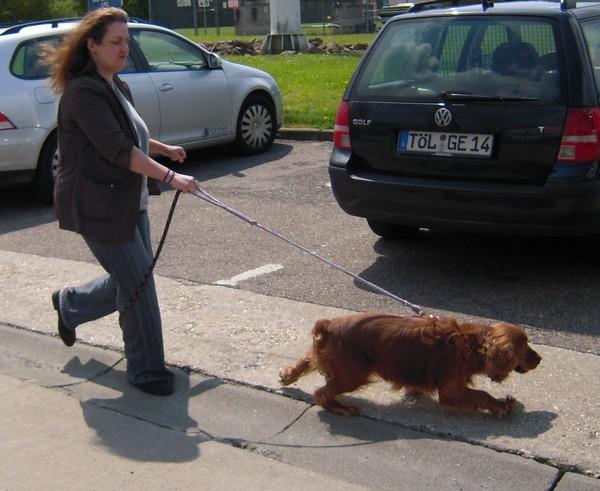 Covoiturage de 6 chiens (15 mai 2010) Anette10