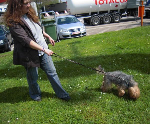 Covoiturage de 6 chiens (15 mai 2010) Annett11