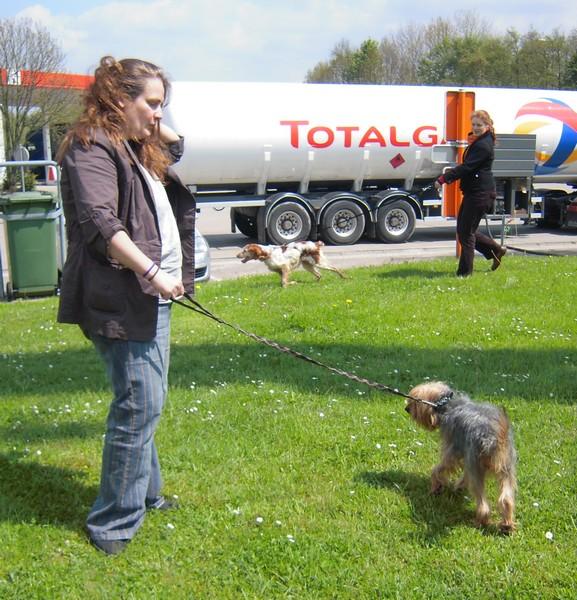 Covoiturage de 6 chiens (15 mai 2010) Annett12