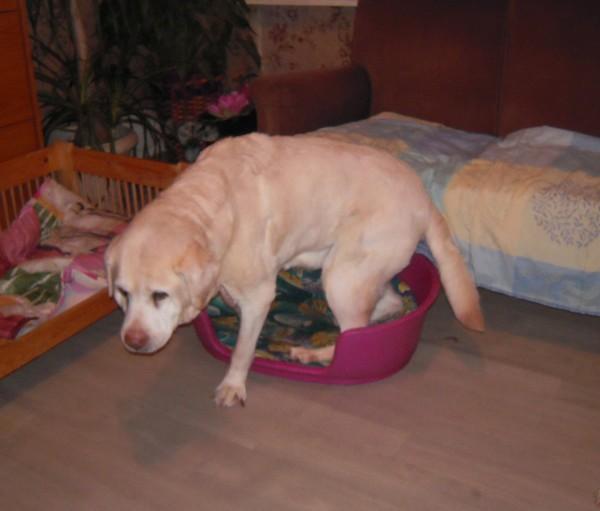 GROSSE, MOI ?? (7 mars 2010) Belle-10