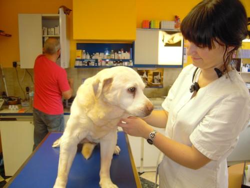 BELLE a vaincu la tumeur (18 juin 2010) Belle-31