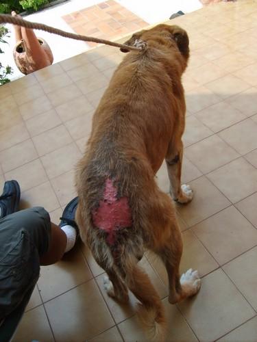 Sos-Décharge vous lance un appel désespéré (association pour les chiens de Corse) Bone_b10