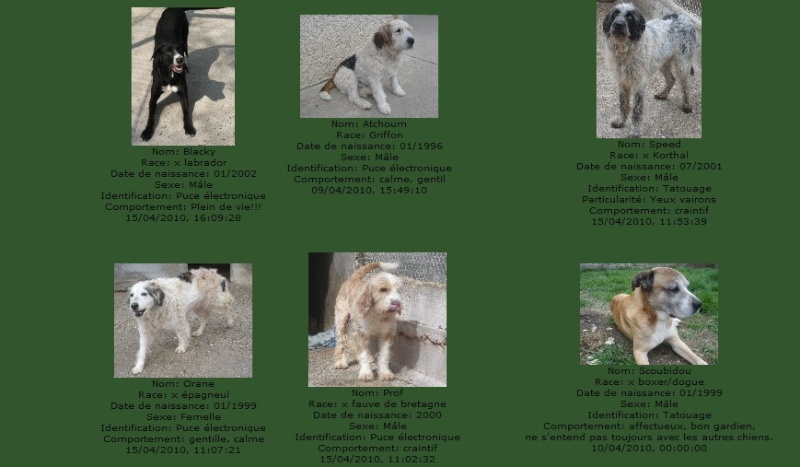 -de 6 mois pour sauver 50 chiens de plus de 5 ans (26) C101010