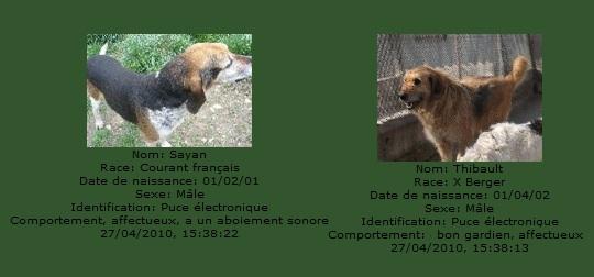 -de 6 mois pour sauver 50 chiens de plus de 5 ans (26) C1101010